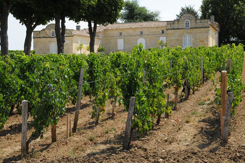 Charente Vineyard
