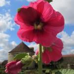 medieval garden flowers